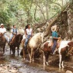Puerto Vallarta Fishing - Horseback Riding