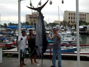 puerto vallarta marlin fishing