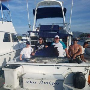 sailfish catching in puerto vallarta mexico