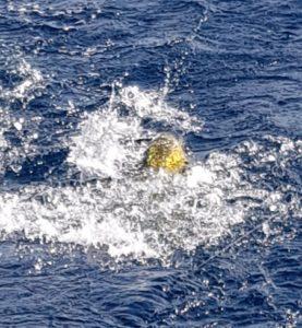 fishing charters in puerto vallarta