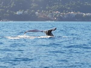fishing and whale watching in puerto vallarta
