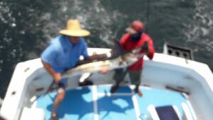 deep sea fishing in june puerto vallarta